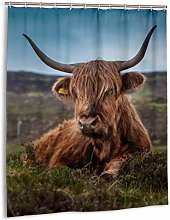 Beef Scotland Highland Beef Cow Ox Meadow Shower
