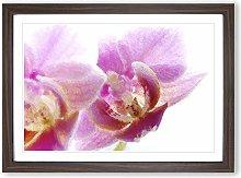 Big Box Art A Pink Orchid Flower Framed Wall Art