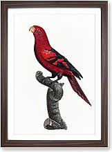 Big Box Art A Violet-Necked Lory by F. Levaillant