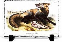 Big Box Art American Cross-Fox by J.W. Audubon,