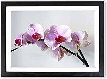 Big Box Art Flower Pink Orchid (2) Framed Wall Art