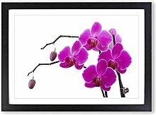Big Box Art Flower Pink Orchid (4) Framed Wall Art
