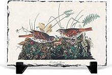 Big Box Art Fox-coloured Sparrow by John James