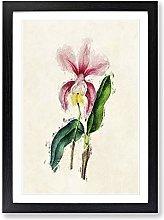 Big Box Art Illustration of a Pink Cattleya Orchid