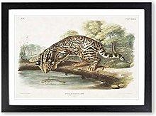 Big Box Art Leopard-Cat by J.W. Audubon Framed
