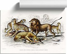 Big Box Art Lion, Tiger, Leopard and Jaguar by