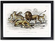 Big Box Art Lion, Tiger, Leopard & Jaguar by