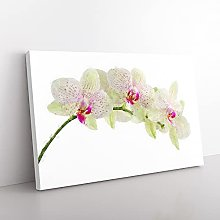Big Box Art Orchid Flowers Vol.1 Painting Canvas