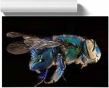 Big Box Art Poster Print Wall Art Blue Orchid Bee