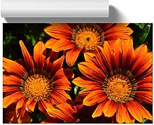 Big Box Art Poster Print Wall Art Orange Flower |