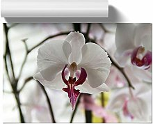 Big Box Art Poster Print Wall Art White Orchid