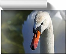 Big Box Art Poster Print Wall Art White Swan |