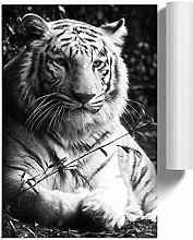 Big Box Art Poster Print Wall Art White Tiger |