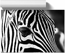 Big Box Art Poster Print Wall Art Zebra (2) | Home