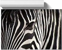 Big Box Art Poster Print Wall Art Zebra (4) | Home