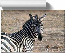 Big Box Art Poster Print Wall Art Zebra | Home