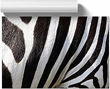 Big Box Art Poster Print Wall Art Zebra Skin |