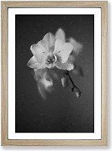 Big Box Art Pretty White Orchid Framed Wall Art