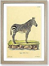 Big Box Art Vintage Jacques de Zebra Framed Wall