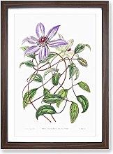 Big Box Art Violet Clematis Flowers Framed Wall