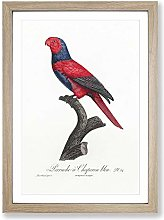 Big Box Art Violet-Necked Lory by F. Levaillant