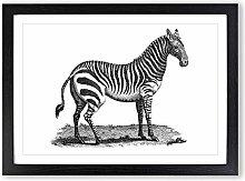 Big Box Art Zebra in Black & White by George Shaw