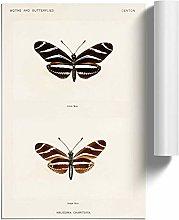 Big Box Art Zebra Longwing Butterfly by S.F.