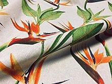 Bird of Paradise Ginger Plant Crane Flower Floral