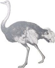 Black and White Ostrich Printed Vinyl Wall Sticker