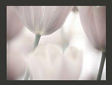Black and White Tulips Fine Art 1.93m x 250cm