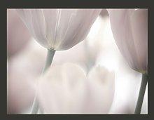 Black and White Tulips Fine Art 2.31m x 300cm