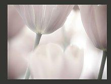 Black and White Tulips Fine Art 2.7m x 350cm