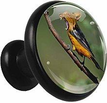 Black Round Cabinet Knobs Branch Bird Handles and