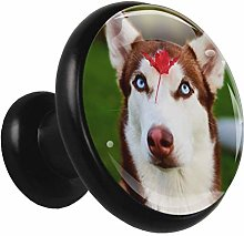 Black Round Cabinet Knobs Cute Husky Handles and