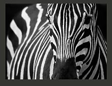 Black Striped White 2.31m x 300cm Wallpaper East