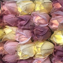 BLAZE ON Designer Chelsea Rose Fairy Lights (Pink
