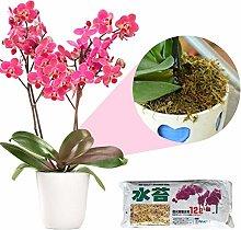 Bloomma Moss for Garden Supplies Sphagnum Moss