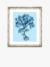 Blue Coral 7 - Framed Print & Mount, 46 x 36cm,