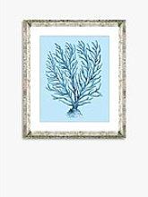 Blue Coral 9 - Framed Print & Mount, 46 x 36cm,