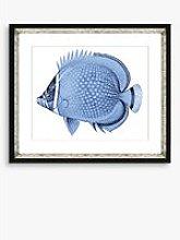 Blue Fish 4 - Framed Print & Mount, 36 x 46cm, Blue