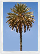 Blue Sky Palm 1 - Framed Print & Mount, 66 x 46cm,