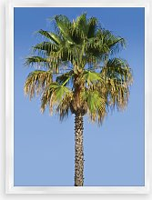 Blue Sky Palm 2 - Framed Print & Mount, 66 x 46cm,