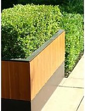 Box (Buxus) Hedging Pack - 10 Plants In 9Cm Pots