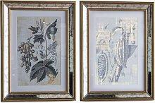 Braun Botanicals - Framed Print & Mount, Set of 2,