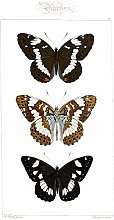 Butterflies Black and Brown Large Wall Art Print