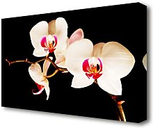 Butterfly Orchid Petals Flowers Canvas Print Wall