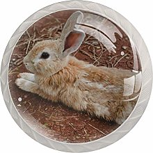 Cabinet Knobs Pulls Rabbit Land Round Crystal