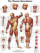 Canvas Painting Human Anatomy Muscles System Art