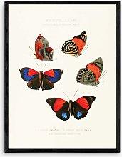 Capricorn Press - 'Butterflies' Framed