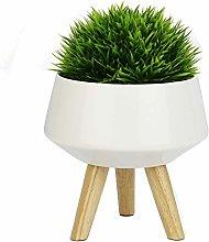 Ceramic Plant Pot | Home & Office Indoor Natural